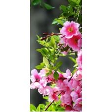 Пано - Пролетен цвят