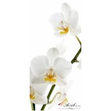 Пано - Орхидея 4