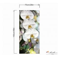 Пано - Орхидея 5