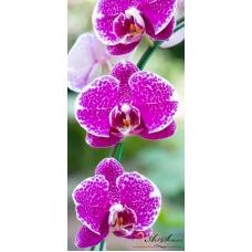Пано - Орхидея 7