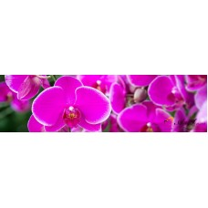 Стикер пано за кухня - Орхидеи 2