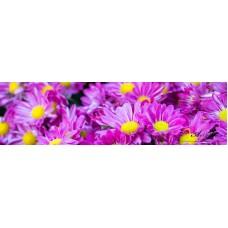 Стикер за кухня пано - Хризантеми
