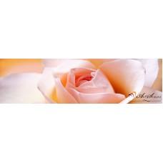 Стикер за кухня пано - Бяла роза