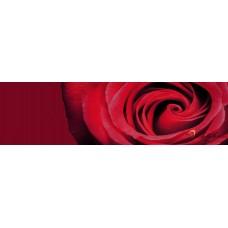 Стикер пано за кухня - Червена роза