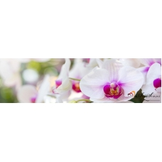 За кухня стикер пано - Орхидеи 5