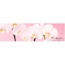 Стикер пано за кухня - Орхидеи 8