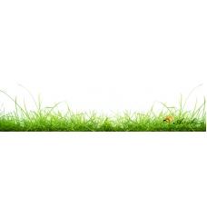Стикер пано за гръб на кухня - Трева